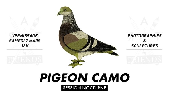 Pigeon CAMO
