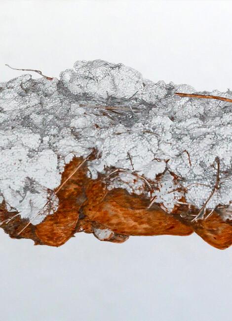 Laura Ben Haïba - Naturalia, artificialia et caetera…